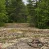 Hodgins Campsite