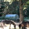 Donkey, Goats, Bees + Pool Access