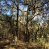 The Wild Woodstead