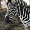 Ford Farms Petting Zoo Farm House