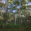 Haus Camp: Meadow/Deciduous Forest