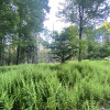 Forest retreat-Lake Wallenpaupack