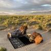 Desert Dunes View