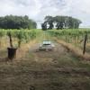 #1 - Hunt's Hillside Vineyard-Foch