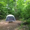 Sugar Maple & Fern Forest