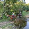 Barn site or private creek site