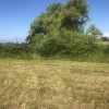 The Holy Hay Field at Green Acres