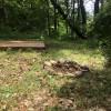 Cedar Forest Site