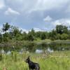 Pine Forest Campground