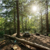 Overlook Forest Camp - Open!