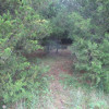 Rabbits Den