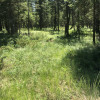 Pine forested area