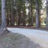 Under the Cedars -  6 dry sites