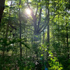 Forested ORV paradise in CT