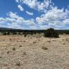 New Mexico Tall Pinons lakeside