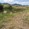 Frankie's Pond