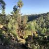 Sky Mountain - Shady Pines