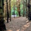 Wicklow Woods