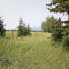 Aspen grove with mountain views