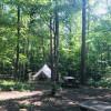 Woodland Campsite at Sparkroot Farm