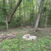 My back yard forest.