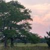 Oak and Yarrow camp