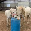 24 acre horse farm camping