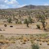 Robaloo Ranch
