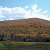 Catskill woods