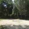 Pine Tree Paradise