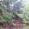 Cantalo Creek Camping
