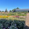 Cabbage Hill Flower Farm