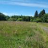 Elk Meadows - In The Trees