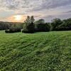 Freedom Field @ Milo Farm