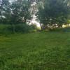 Nature Trails 3 - Morning Glory