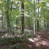Primitive camp sites private forest