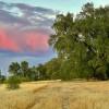 Corning Oaks