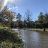 Hazel River - Harmony Tree Farm