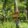 Hippie Holler