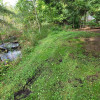 Flowing waters #2