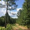 Quiet Creek & Meadow