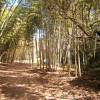 Belli Bamboo Parkland