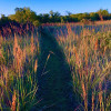 Sage refuge  Trees, prairie, creek