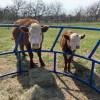 Farm Sanctuary Farm Sounds Peaceful
