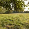 Anderton Farms