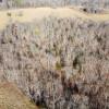 Big Sky Meadow and Pond
