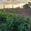 Streamside Meadow at Stormbrew Farm