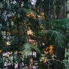 Crystal Creek Treehouse