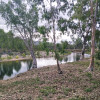 Haughton River Camping