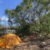 Mango Tree Campsite